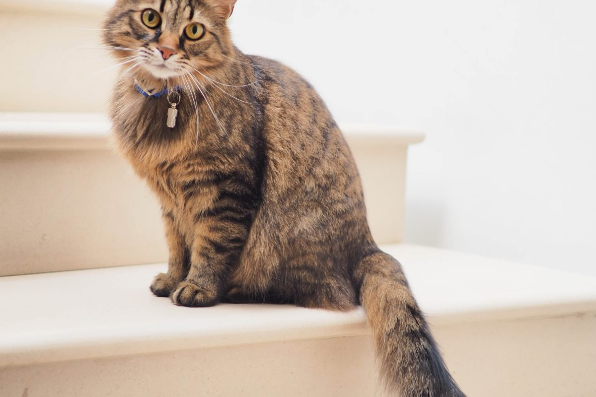A brown cat sitting on the stairs