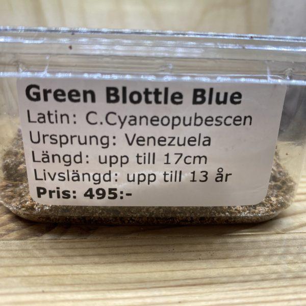 Green Bottle Blue
