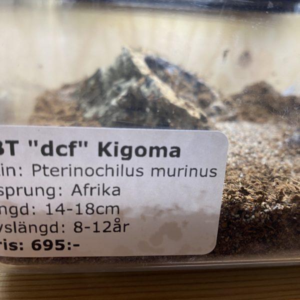"OBT ""dcf"" Kigoma"