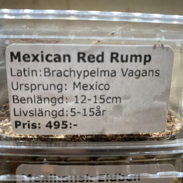 Mexican Red Rump
